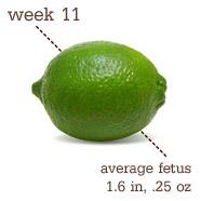 Week 11 - Lime