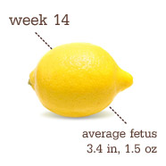 week-14-lemon