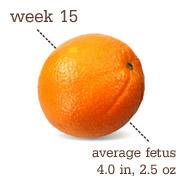 week15-orange
