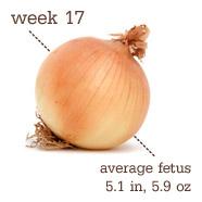 Week 17 Onion