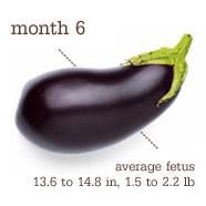 Week 25 - Eggplant
